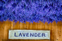 Lavender by the Bay 2016