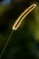 WatersideMillPA_Aug162014_0601