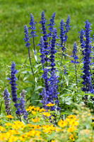 ClarkGarden_Sep082014_0115