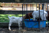 SufffolkFarm-Horses_May252014_0035