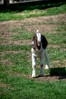 SufffolkFarm-Horses_May252014_0050
